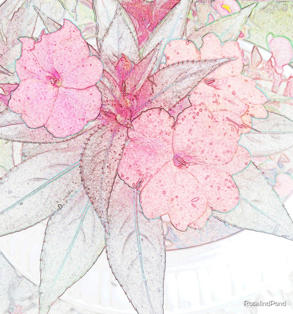 Sketched Impatiens by RosalindPond