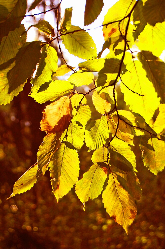 Autumn Sunshine by Demoiselle