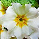 Waikiki Floral Study 7  by Robert Meyers-Lussier