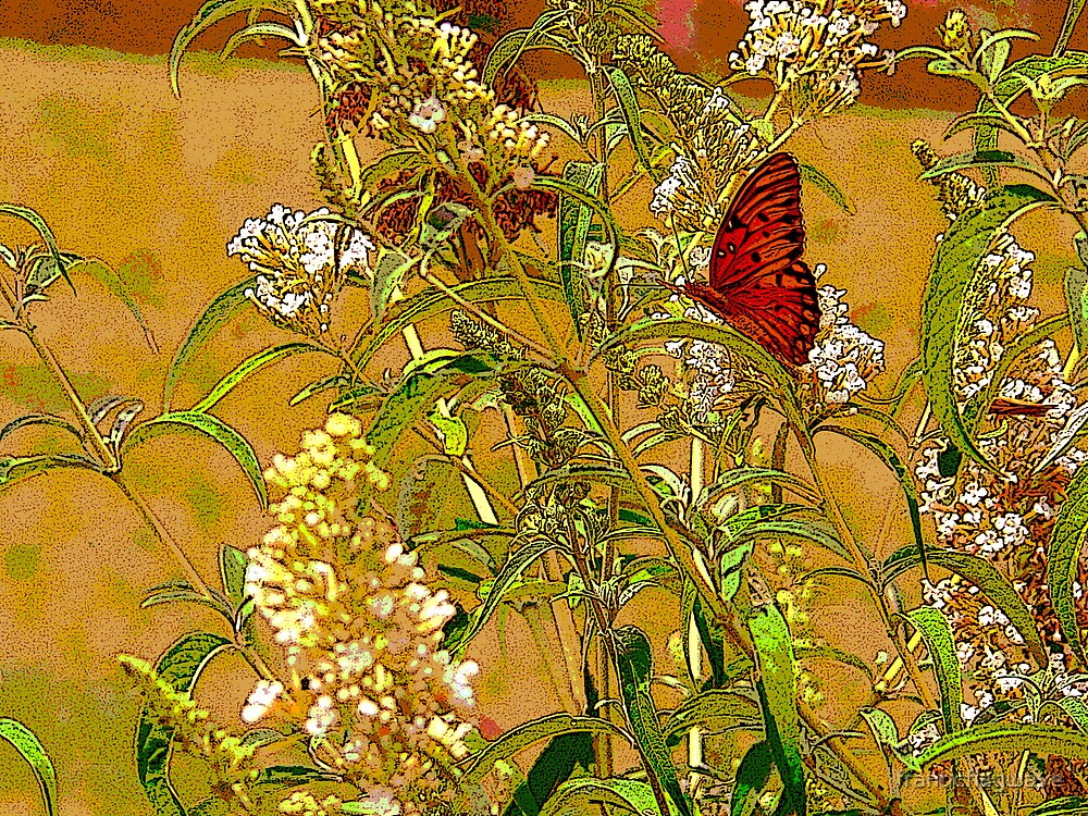 """Butterfly On the Butterfly Bush"" by franticflagwave"