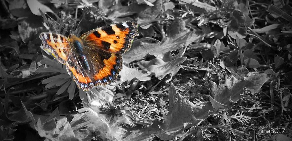 Butterfly by nina3017