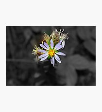 Periwinkle Focal Photographic Print
