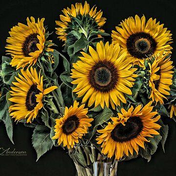 10 Sunflowers by CJAnderson