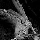 Tree #2 by Josef Grosch