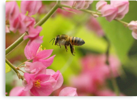Bee gathering pollen from pretty pink flowers by kellimays