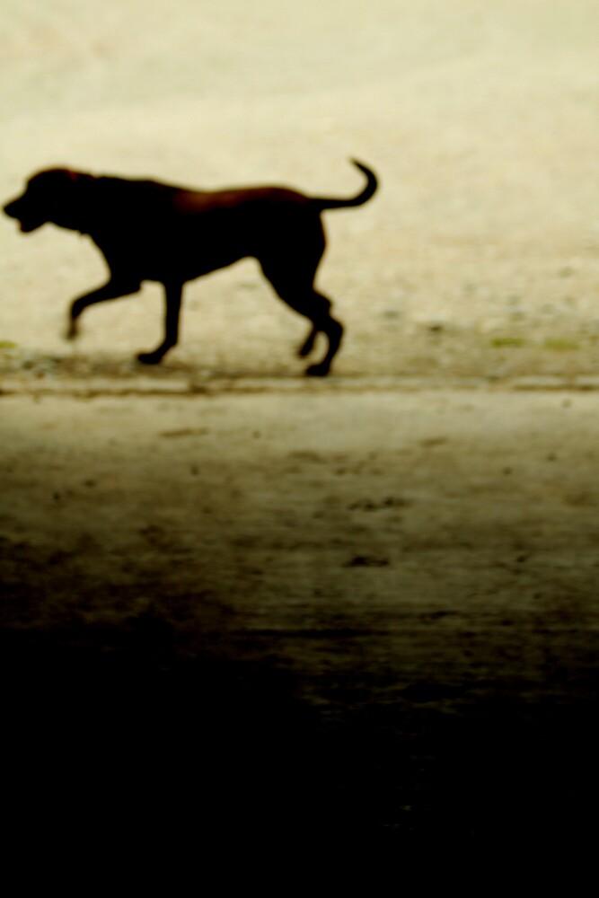 Brown Dog by Sophie cooper