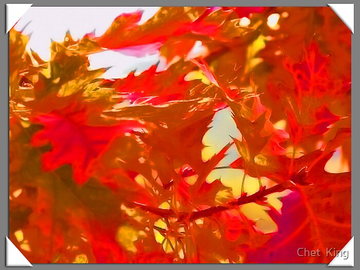 Autumn Scrapbook by Chet  King