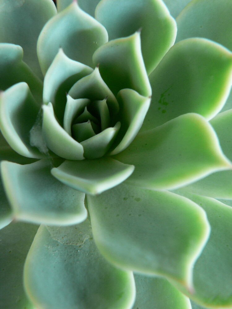 Green Succulent 1 by Framed-Photos