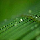 """""""SURVIVAL"""" of a raindrop by Magriet Meintjes"""