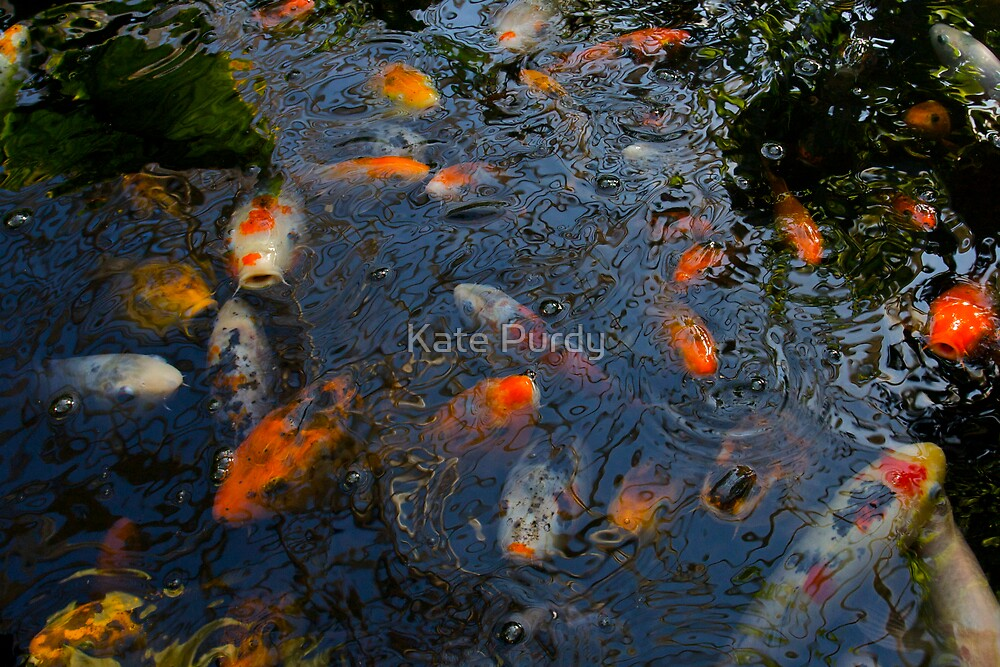koi 4  by Kate Purdy
