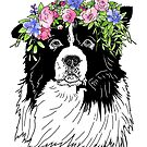 Border Collie  by aheadgraphics