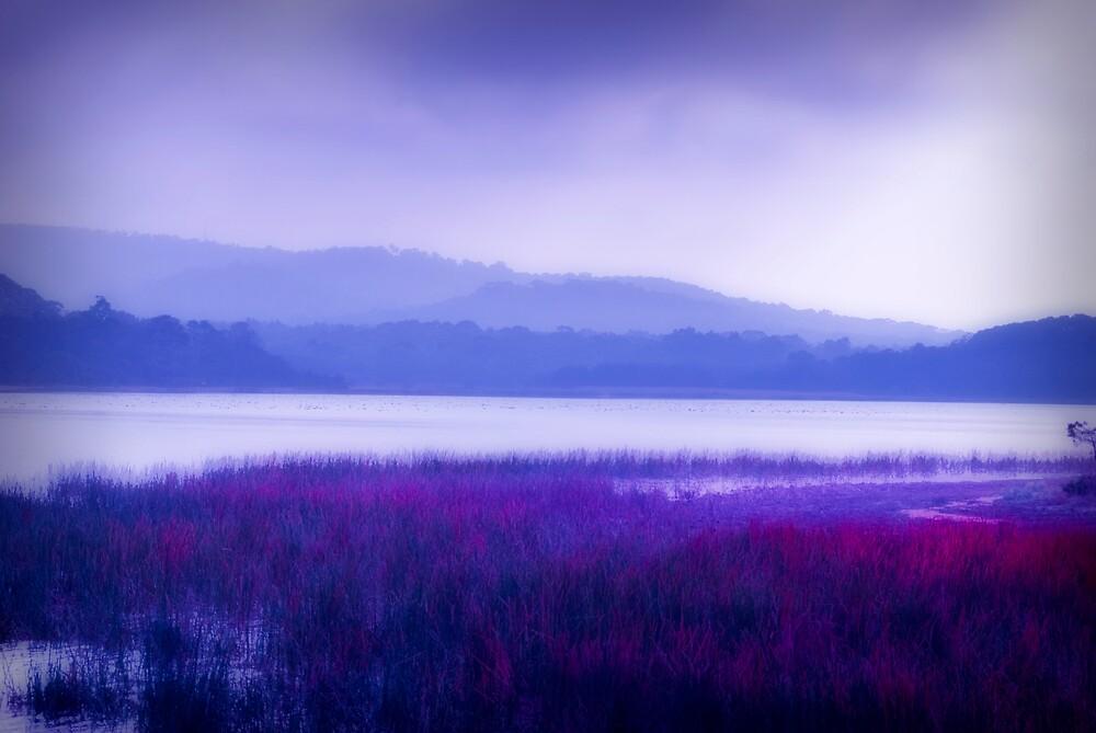 Misty lake by Jurgen  Schulz