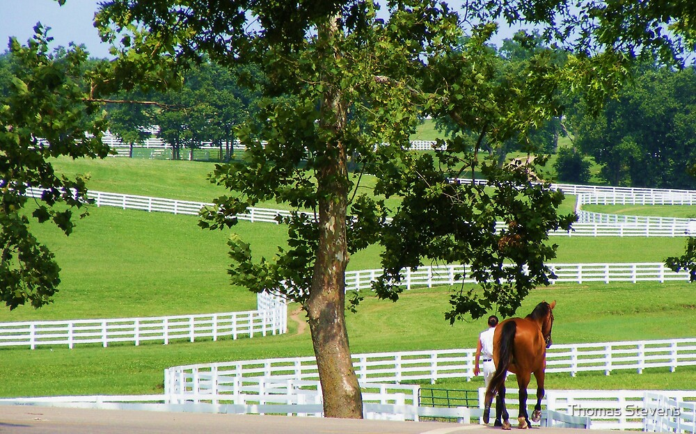 Morning in Keenland by Thomas Stevens