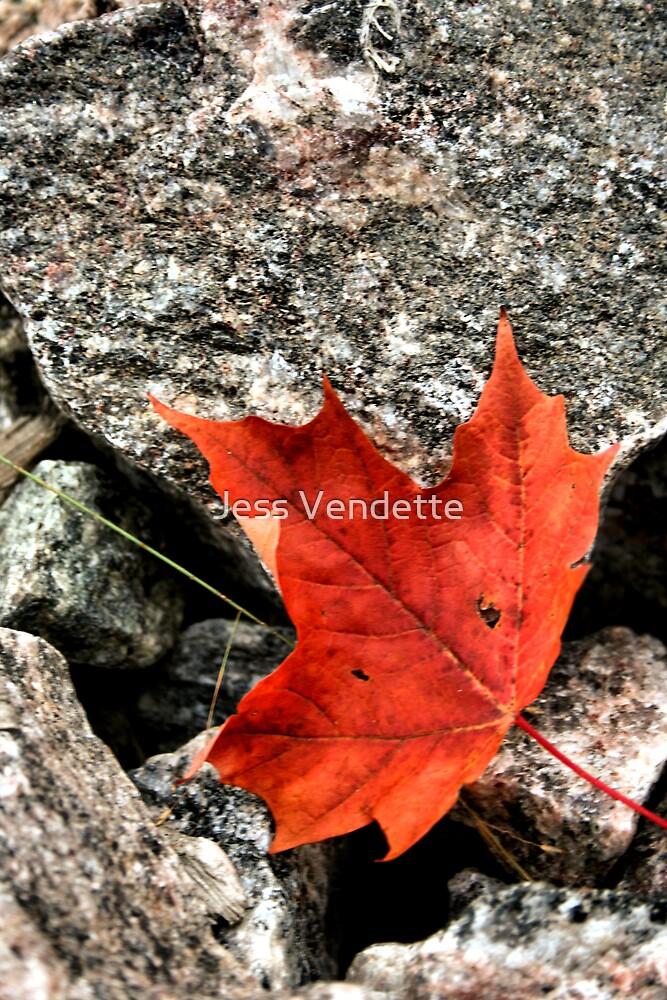 O Canada by Jess Vendette