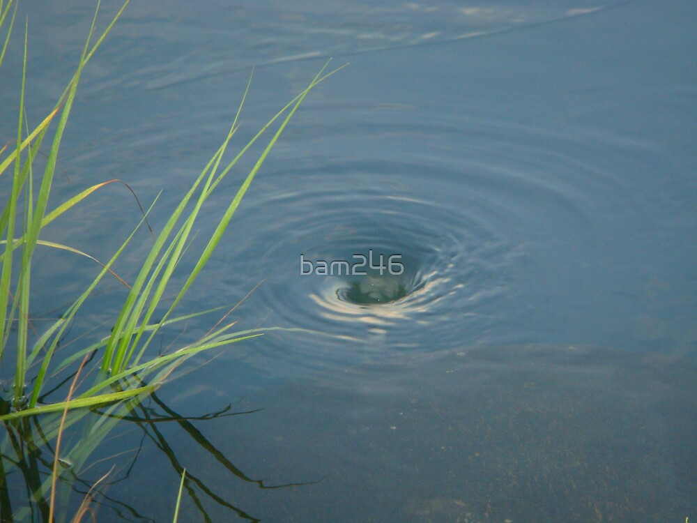 Local Pond Whirlpool by bam246