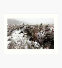 Pandini, Cradle Mountain National Park, Tasmania, Australia Art Print