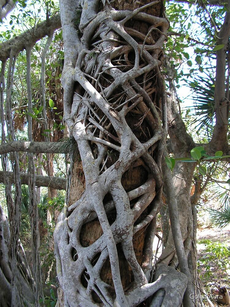 Weird Tree in Florida by GolemAura