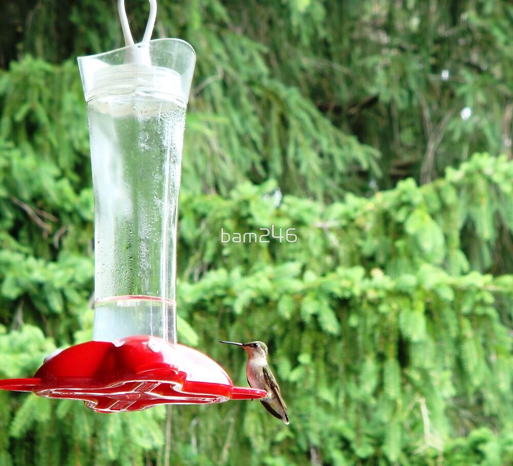 ...ming Bird by bam246