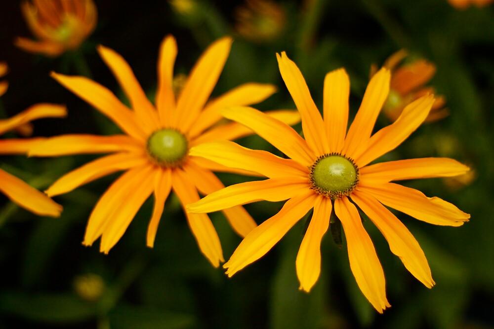 Flower by Mario Alleyne