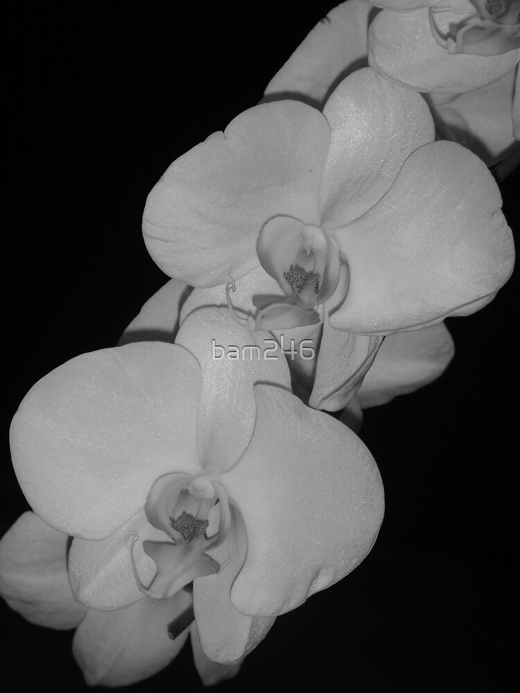 B&W Orchid Single by bam246