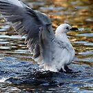 Sea Gull by Vivek Bakshi