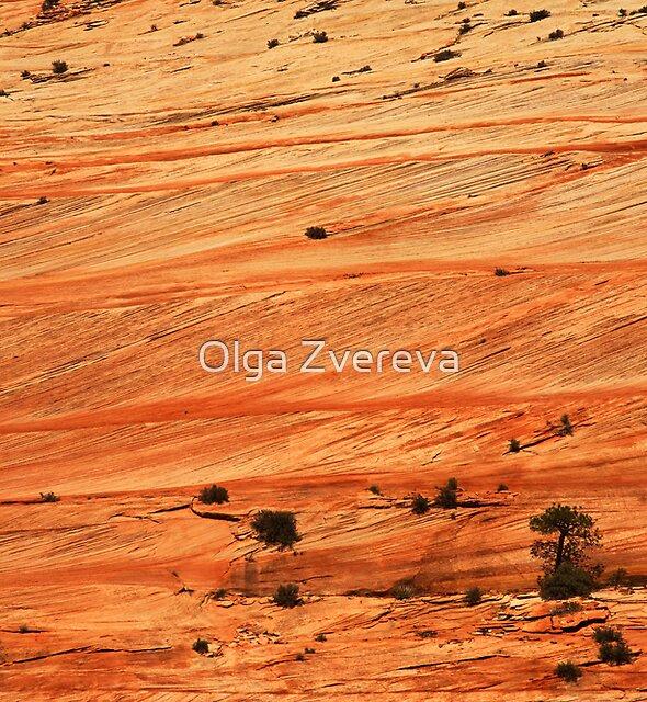 Sandstone Terraces, Zion National Park by Olga Zvereva