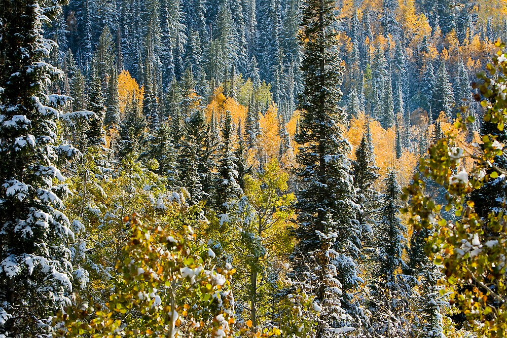 Early Snow by Ken Fortie