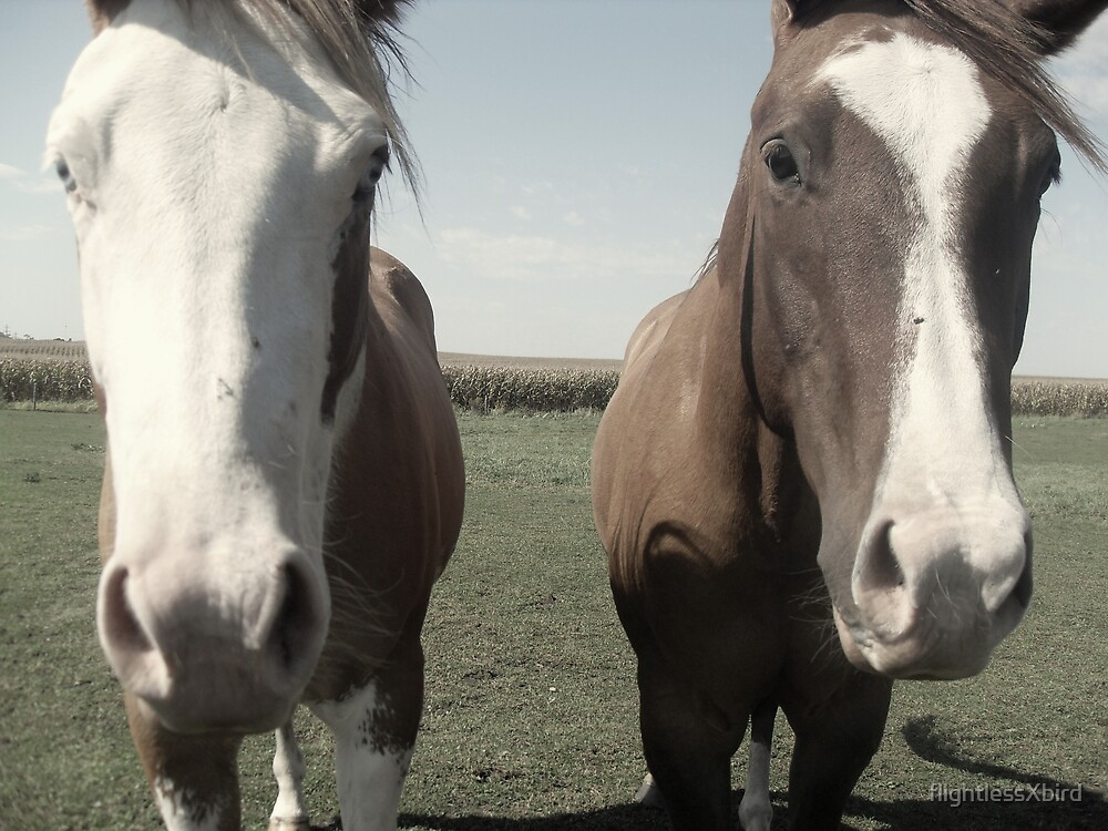 Horses. by flightlessXbird