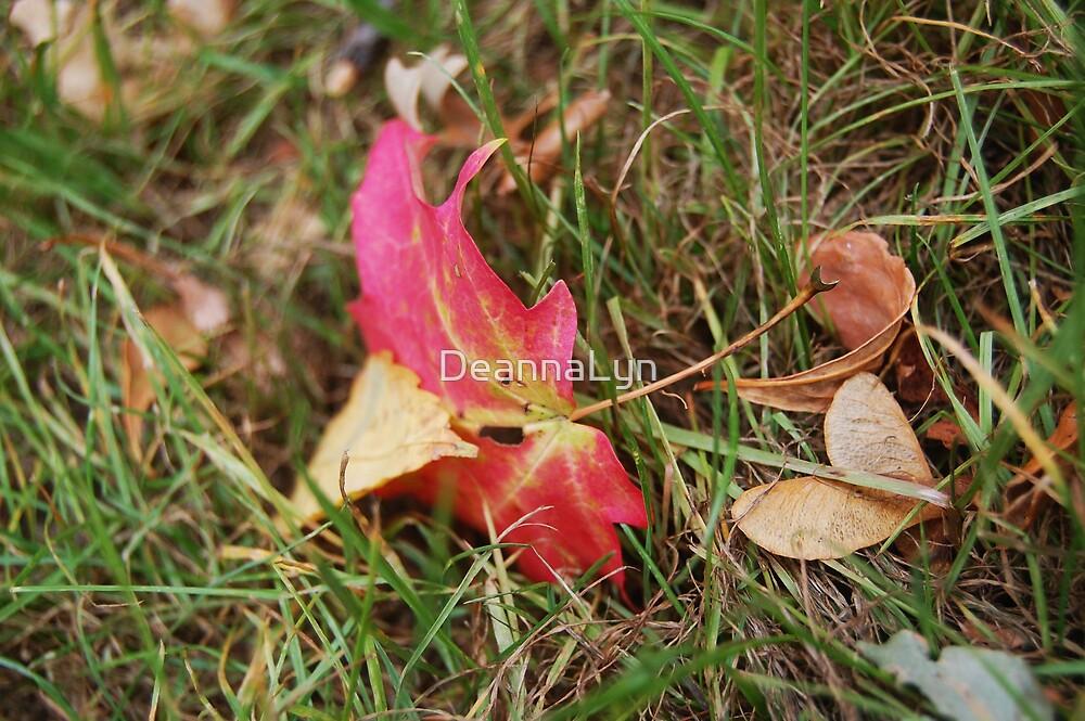 Red Fall Leaf by DeannaLyn