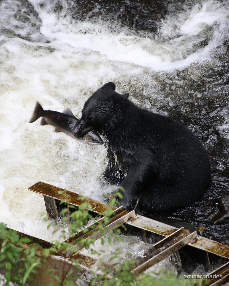 Bear chewing on Salmon by emmarhoades
