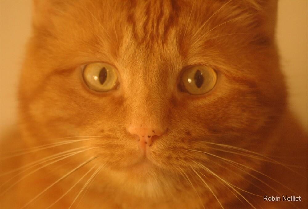 Ginger Cat by Robin Nellist