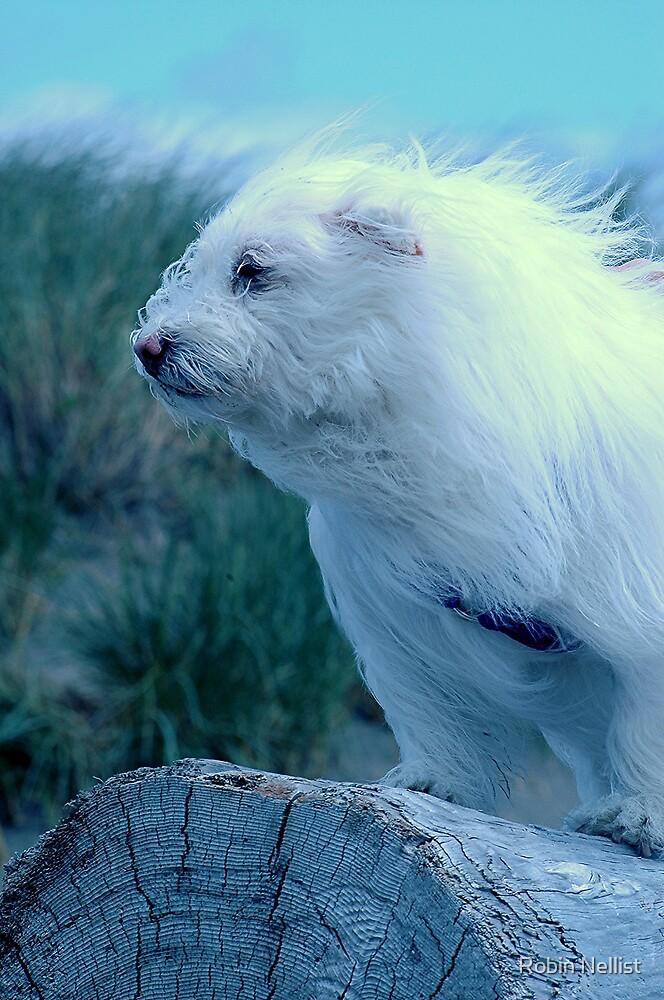 Dog or Polar Bear? by Robin Nellist