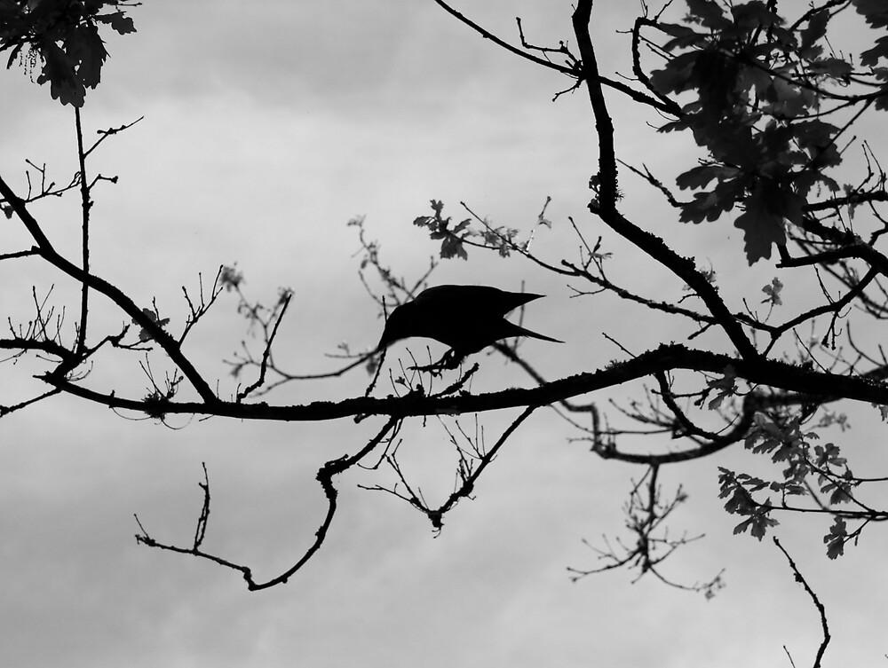 Bird by Mario Alleyne
