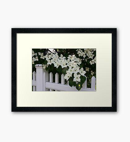White Picket Fence Framed Print
