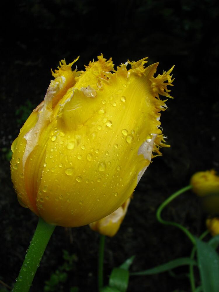 Spring time Rains by mrsnatetah