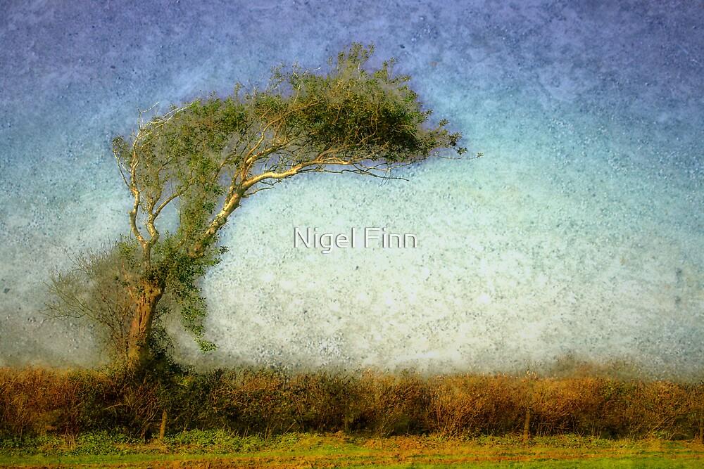 Follow The Wind by Nigel Finn