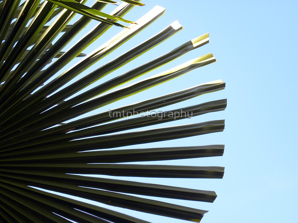 Alki Beach Palm by tmtphotography