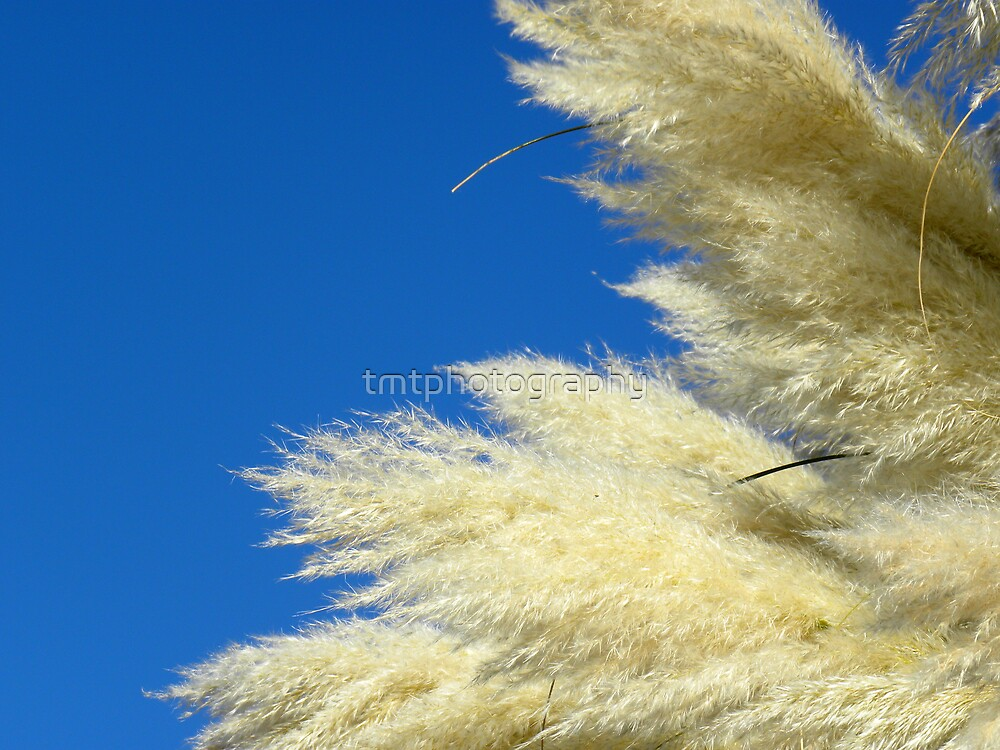 Blowing In The Wind by tmtphotography