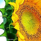 """""""SUNSHINE"""" by Magriet Meintjes"""