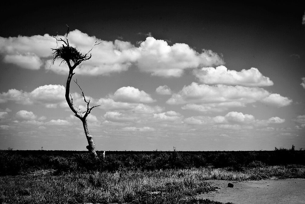 Hay Plains by Lauren Drage {Photography}