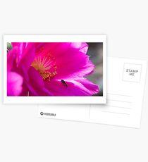 Pollination Postcards