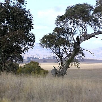 Canberra Countryside Drought by ginnymac