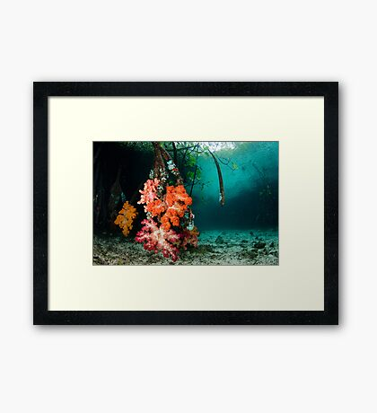 Soft Coral in Blue Water Mangroves Framed Print