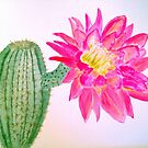 Cactus Bloom by Charisse Colbert