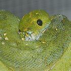 Snakes alive by Brandie1