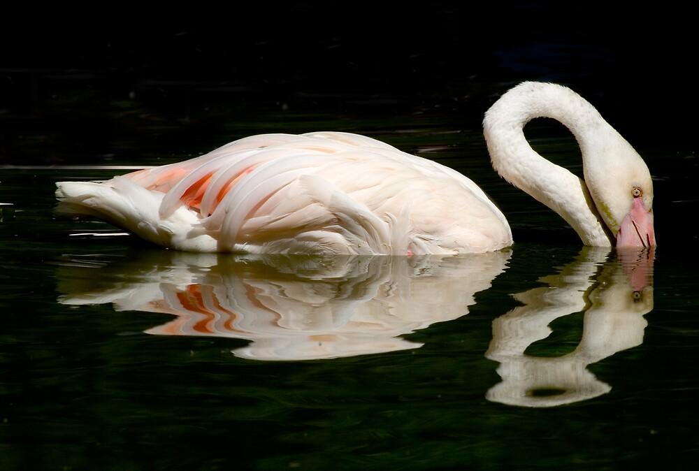 Flamingo Rose! by Carole Stevens