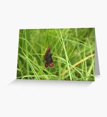 Scotch argus butterfly Greeting Card