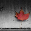 Autumn by Farras Abdelnour