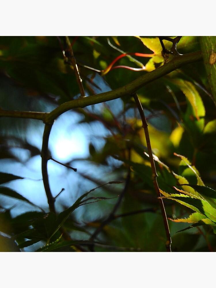 The Serene Wood by elaine226