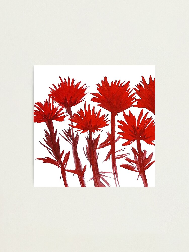Alternate view of Indian Paintbrush  Photographic Print